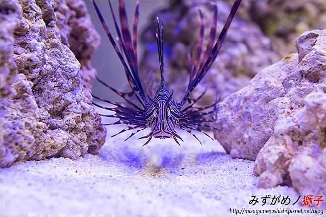 海水缸養水_23.jpg