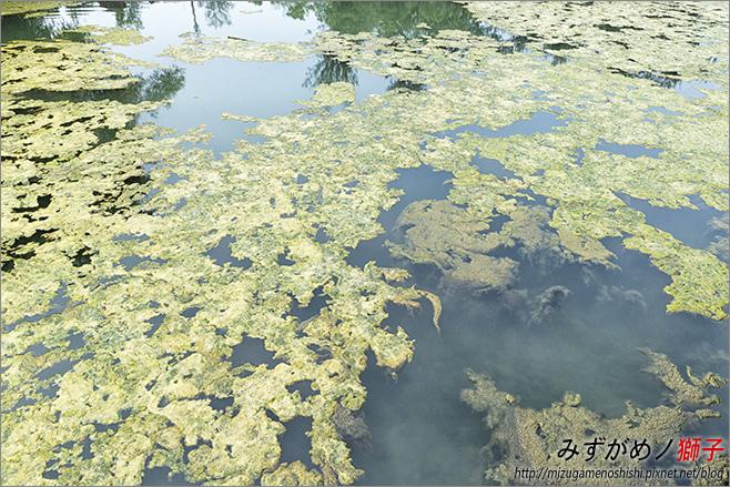 澄清湖_81.jpg