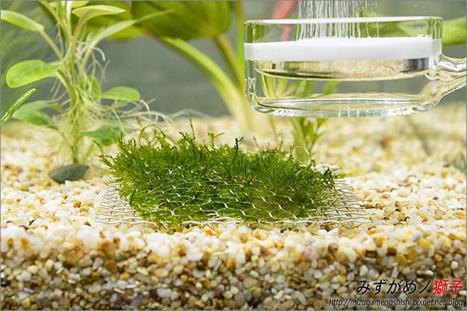 鈉型軟水樹脂用於水草缸之疑慮_20.jpg