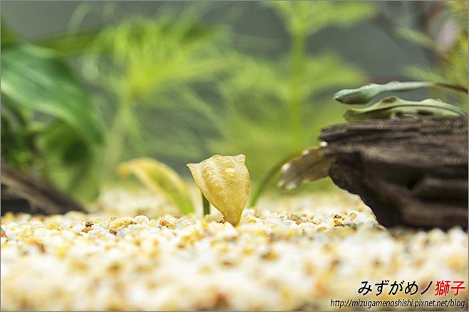 鈉型軟水樹脂用於水草缸之疑慮_18.jpg
