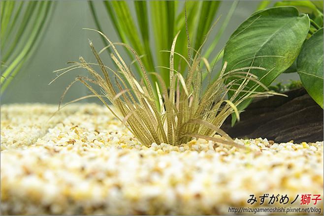 鈉型軟水樹脂用於水草缸之疑慮_16.jpg