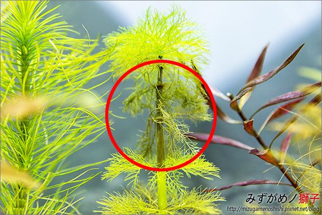 鈉型軟水樹脂用於水草缸之疑慮_28.jpg