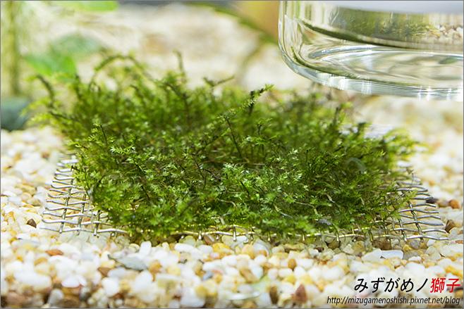 鈉型軟水樹脂用於水草缸之疑慮_29.jpg