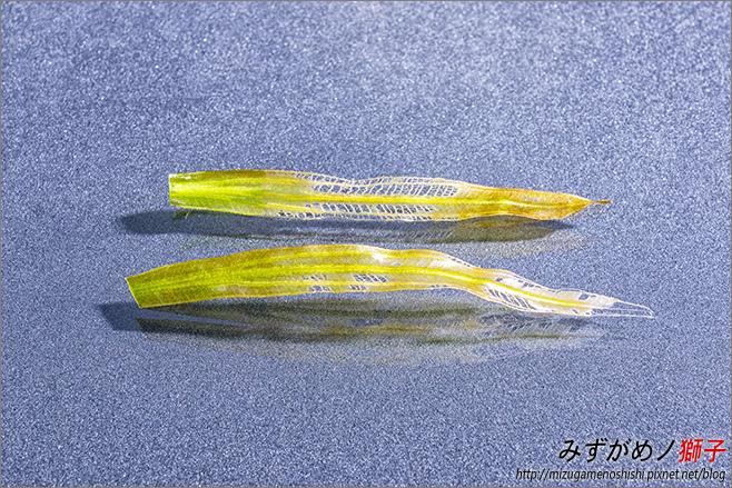 鈉型軟水樹脂用於水草缸之疑慮_33.jpg