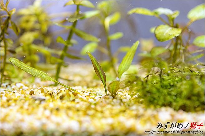 鈉型軟水樹脂用於水草缸之疑慮_39.jpg