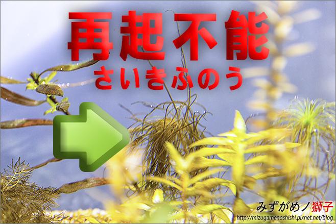 鈉型軟水樹脂用於水草缸之疑慮_41.jpg