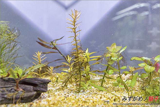 鈉型軟水樹脂用於水草缸之疑慮_40.jpg
