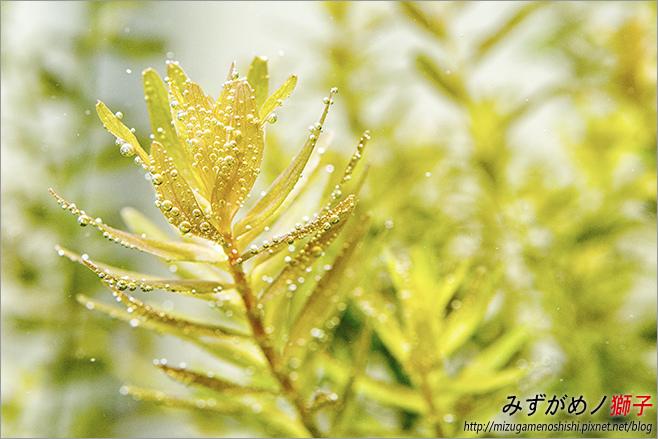 鈉型軟水樹脂用於水草缸之疑慮_1.jpg