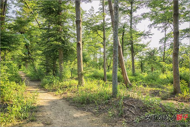虎山森林步道_1.jpg