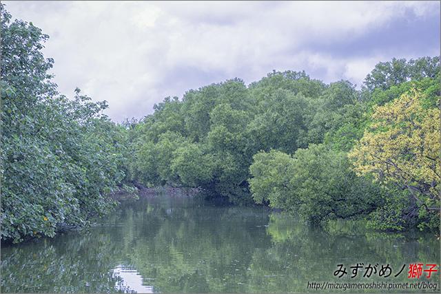 臺南綠色隧道_14.jpg