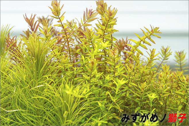 過度供給肥料對植物及環境的傷害_1.jpg