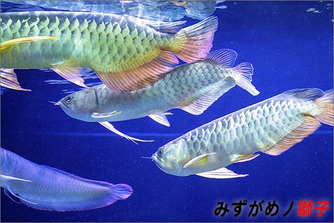 魚缸換水_1.jpg