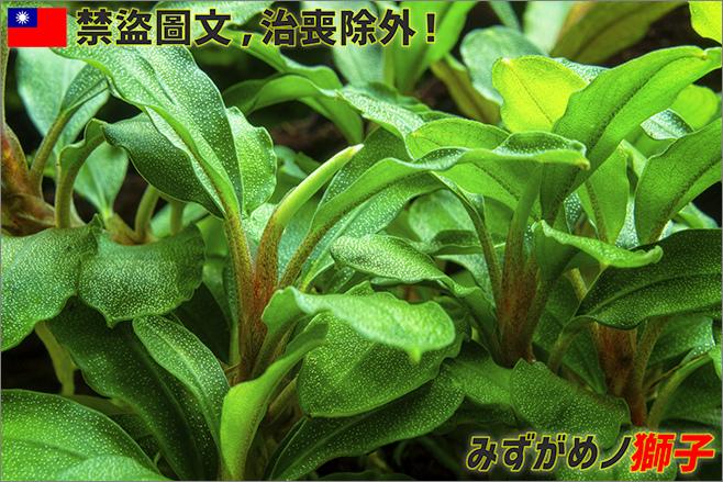 水草的脫鈣現象和改善方法_1.jpg