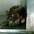2008/08 麵店貓1