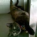 2008/08 麵店貓2
