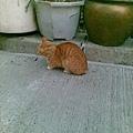 請將此貓與後貓比對