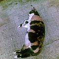 2009/08/20 老人院貓3