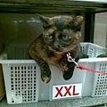 2010/01/16 加大碼的麵店貓