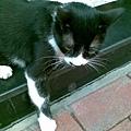 09 2009 06 04 鐵製品店貓.jpg