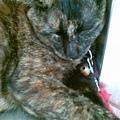 2009/10/14 麵店貓