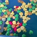 29陣亡的鴨和青蛙.jpg