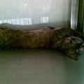 2008/08 麵店貓 3