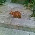 請將此貓與前貓比對
