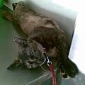 2008/08 麵店貓 4
