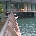 另一個角度所拍的水鳥