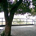 1225016.jpg