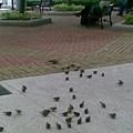 再一張~好多好多小鳥
