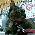 2009/10/23 麵店貓1