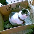 2009/10/16 參茸店貓