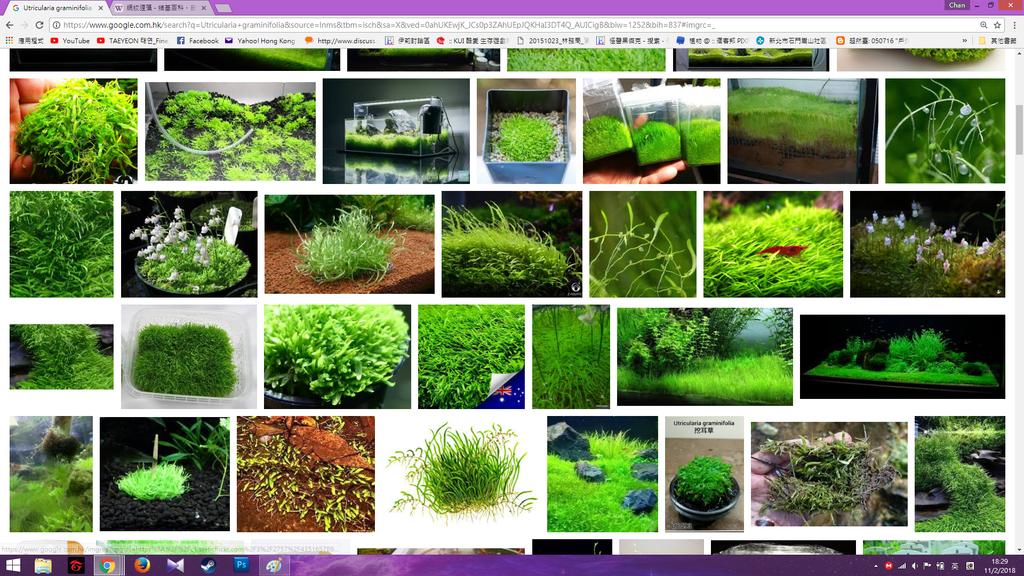 Google 禾葉狸藻圖片.png