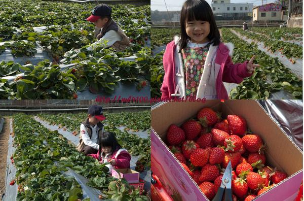 採草莓呢.jpg
