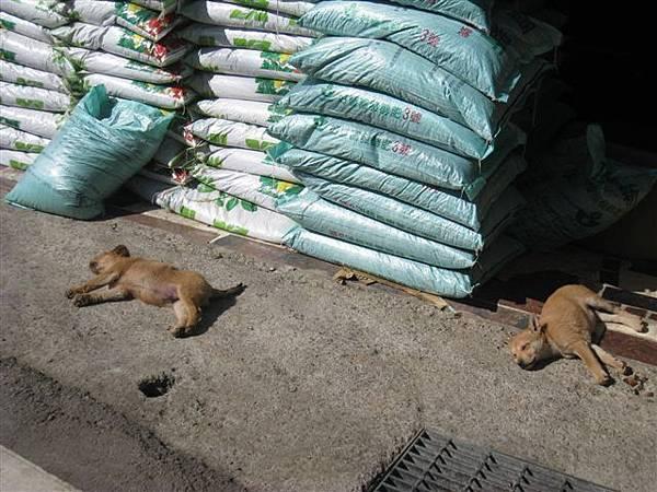 狗狗也在曬太陽