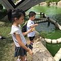 到國營明石海峽公園餵魚