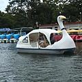 天鵝船again