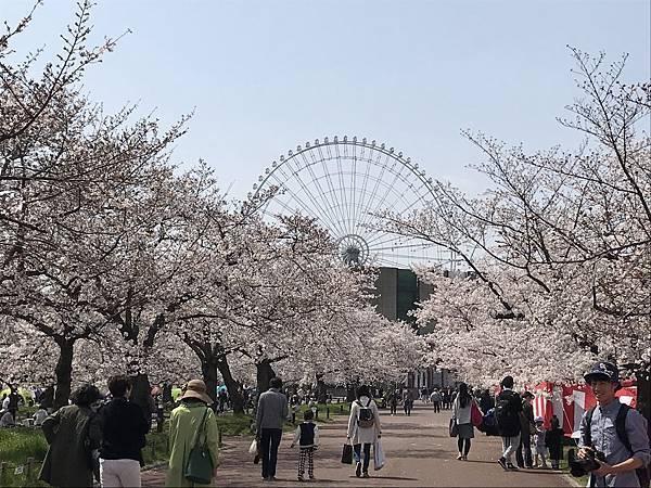 萬博公園、櫻花滿開