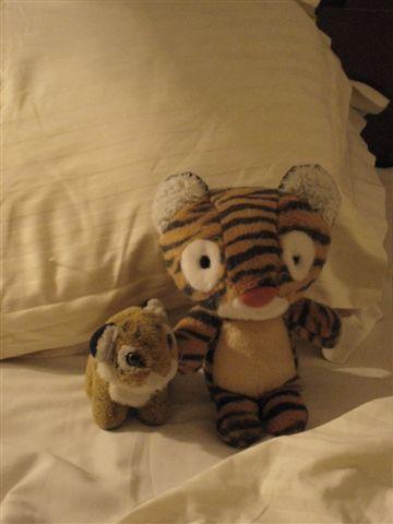 左邊的是小虎 右邊是Kola