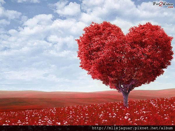 fall-in-love-spells2