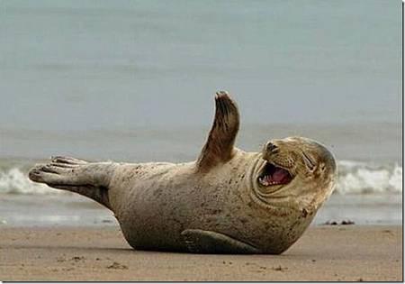 幽默海獅.jpg