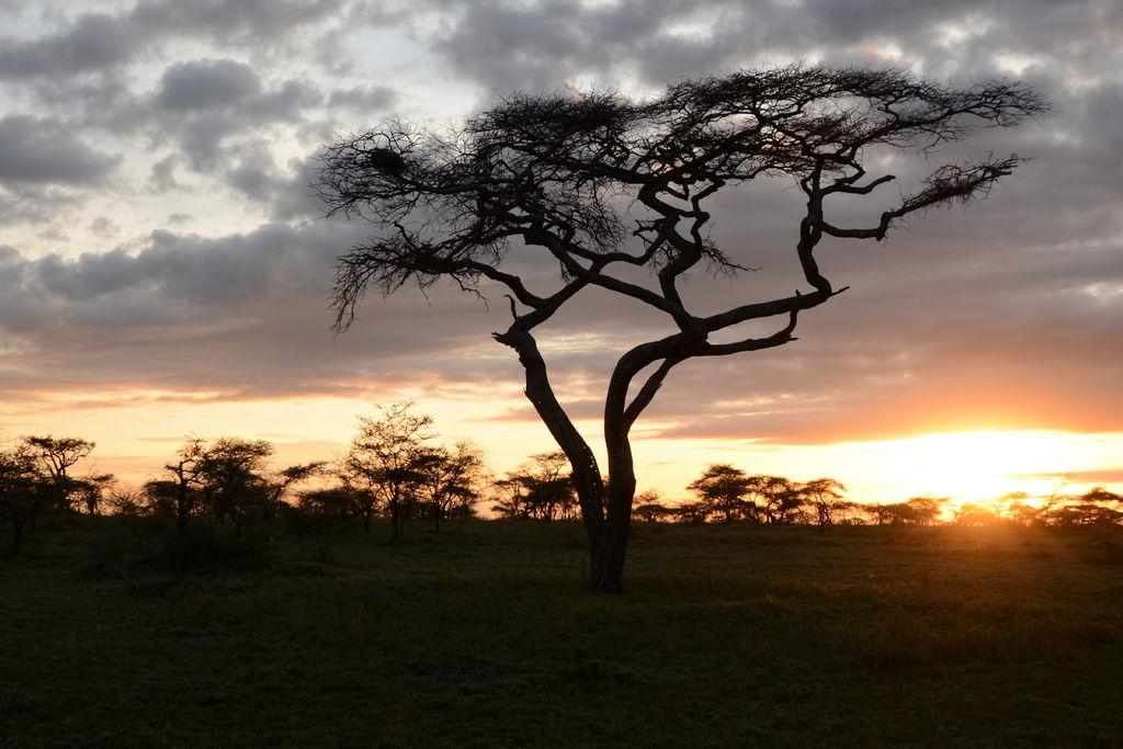 坦尚尼亞日落1