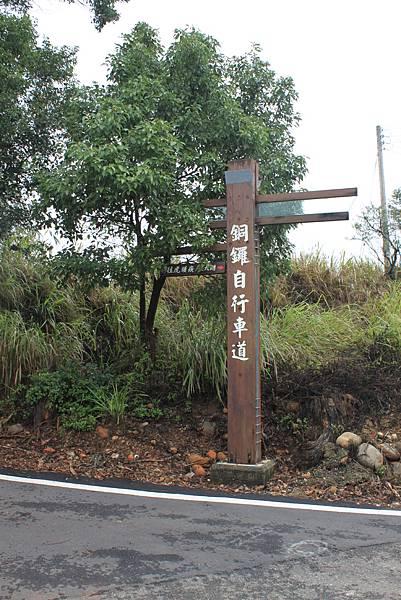 1112銅鑼自行車道杭菊IMG_7128 (1).JPG