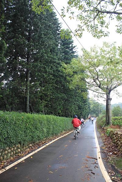 1112銅鑼自行車道杭菊IMG_7128 (3).JPG