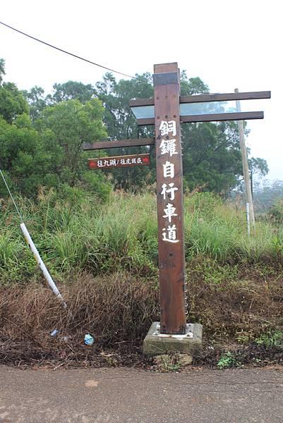 1112銅鑼自行車道杭菊IMG_7128 (8).JPG