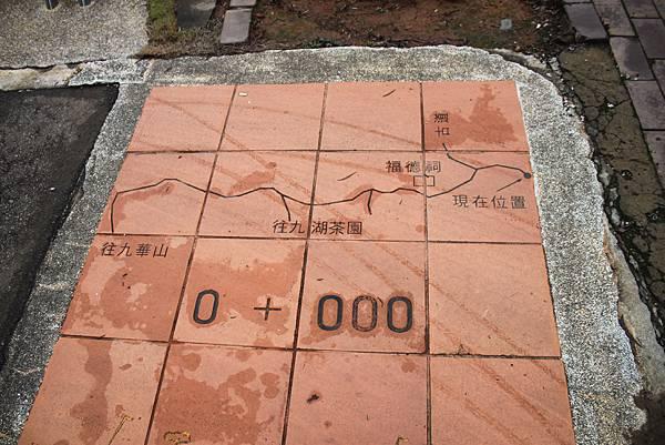 1112銅鑼自行車道杭菊IMG_7128 (12).JPG