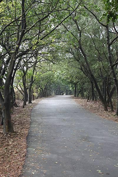 1112銅鑼自行車道杭菊IMG_7128 (45).JPG