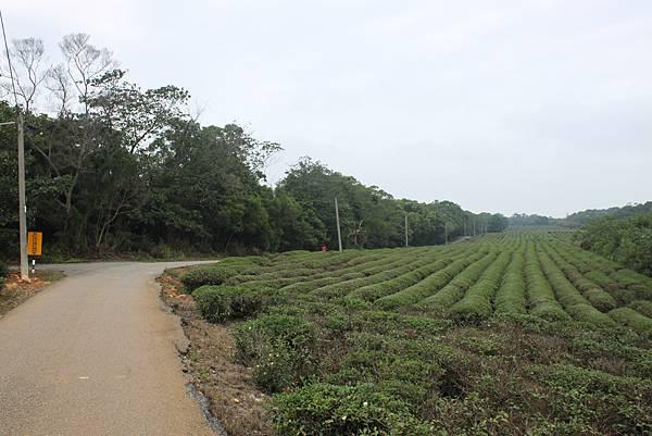1112銅鑼自行車道杭菊IMG_7128 (59).JPG