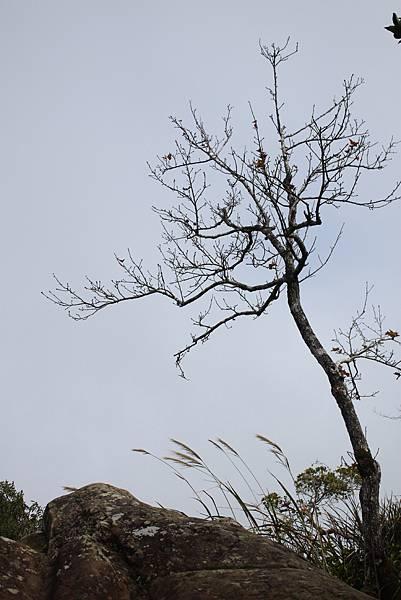 0108大溪白石山 (48).JPG